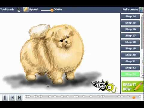 how to draw a pomeranian dog youtube