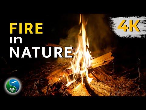 ДУШЕВНЫЙ КОСТЕР в летнюю ночь 🎧 🔥 Горят дрова - ЗВУКИ ОГНЯ и ЗВУКИ ПРИРОДЫ помогут отдохнуть 🔥