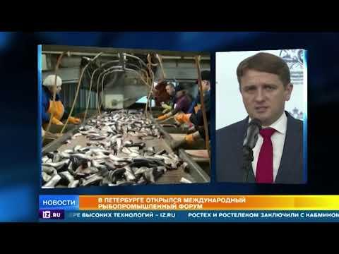 видео: В Петербурге открылся Международный рыбопромышленный форум