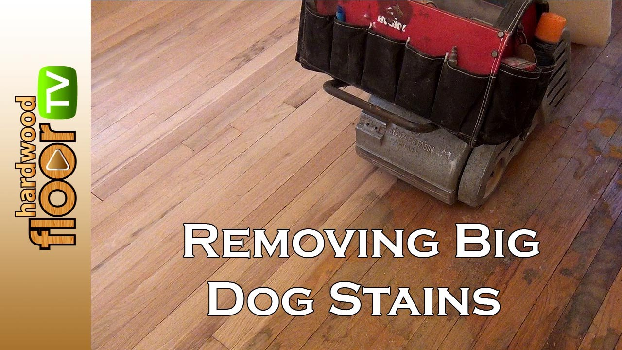 Remove Big Dog Pet Stains In Hardwood Floors   YouTube