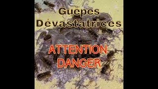 Guepes dévastatrices Attention danger