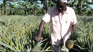 ORGANIC AGRICULTURE: NOGAMU signs MoU support