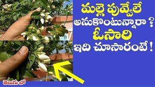 మల్లెపువ్వేలే అనుకొంటున్నారా ? ఓసారి ఇది చూసారంటే ! || WOW! Amazing Uses of jasmine in telugu