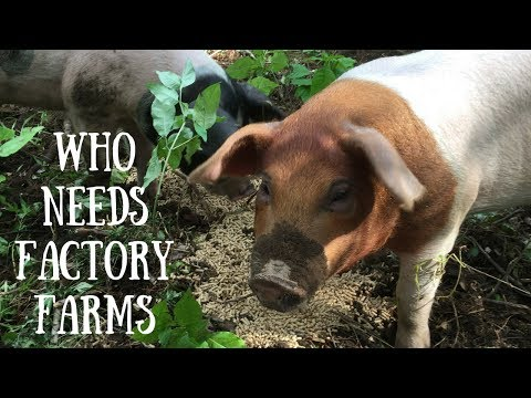 Say No to Factory Farms! Raise Pigs on Pasture for Meat!