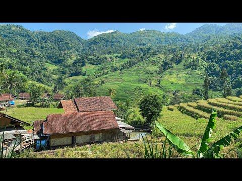 KECAPI SULING SUNDA PALING MERDU U0026 BIKIN BETAH NGABUBURIT   Suasana Pedesaan Garut, Talegong, Jabar