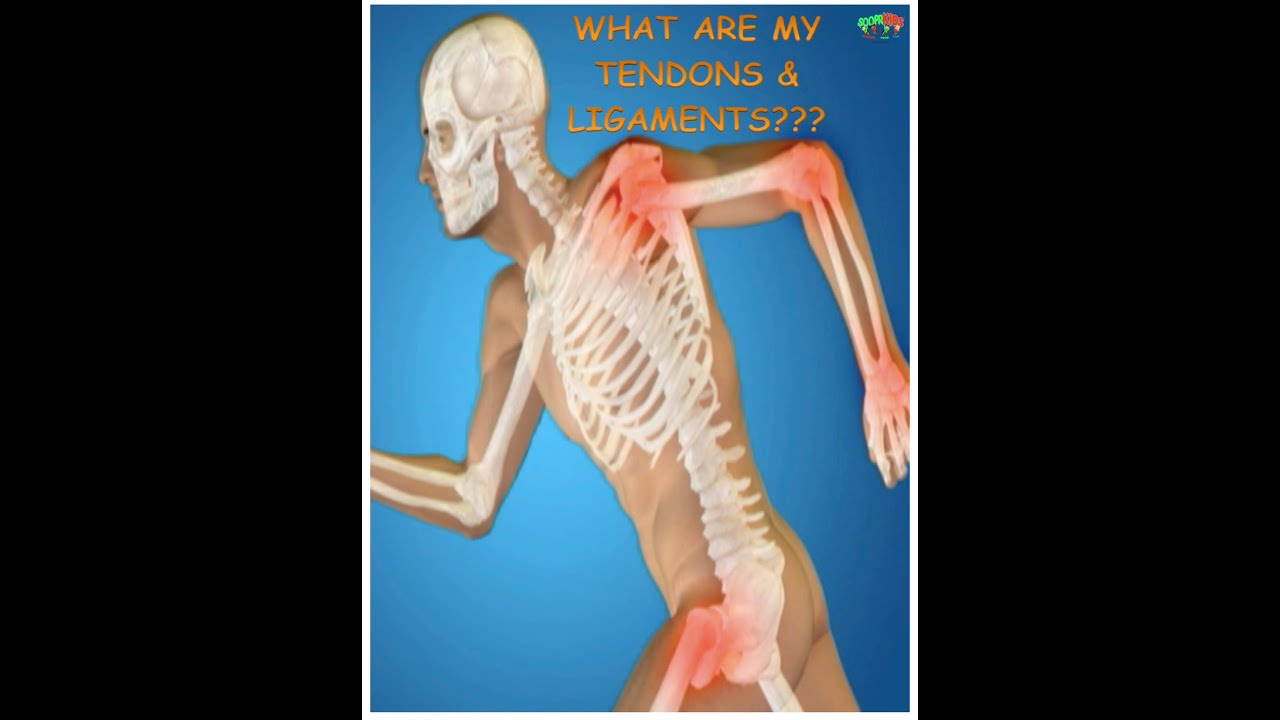Sooprkids What Are My Tendons Ligaments Youtube