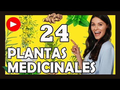 24 PLANTAS MEDICINALES y para qué sirven: Lista, nombre, uso, historia y características