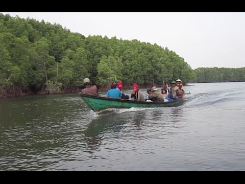 Boat tour sightseeing Peam Krasop Mangrove forest at Koh Kong, southwest Cambodia
