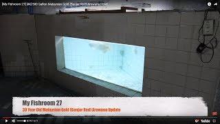 Video [My Fish Room 27] [4k] 500 Gallon Malaysian Gold (Banjar Red)  Arowana Pond download MP3, 3GP, MP4, WEBM, AVI, FLV November 2018
