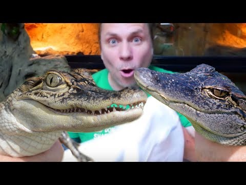 I GOT A BUNCH OF BABY ALLIGATORS FOR THE REPTILE ZOO!!! | BRIAN BARCZYK