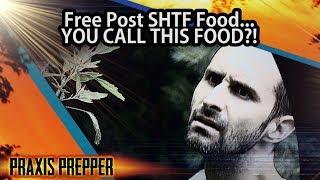 Free Post SHTF Food... YOU CALL THIS FOOD?!