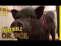 No Hoofin' Around | The Incredible Dr. Pol