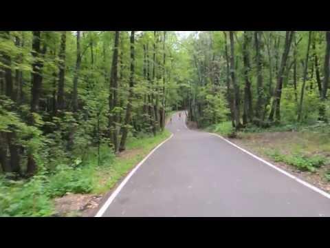 Асфальтовая дорога в лесу