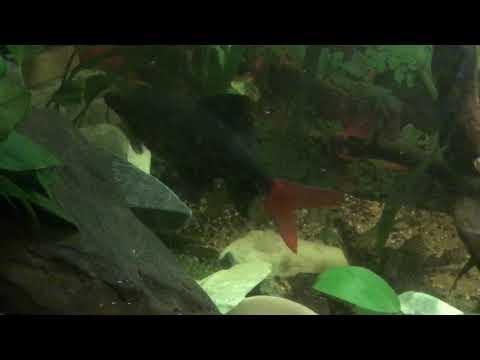 Futterung 240l Stromungsbecken Youtube