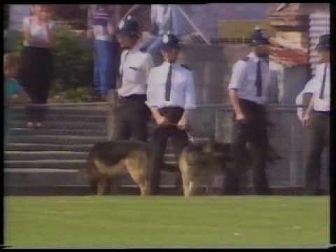 Image result for torquay united season 1986-87