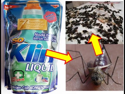 Cukup dengan Minyak Kayu Putih !!Nyamuk Hilang Selamanya || Begini Cara Ampuh Usir Nyamuk assalamual.