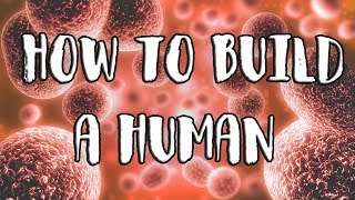 How to Build a Human thumbnail