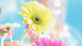 When spring comes  - Khi mùa xuân đến