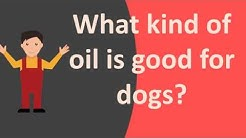 What kind of oil is good for dogs ?