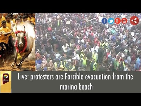 Live: Jallikattu Protesters forcibly evicted by Police from Marina Beach