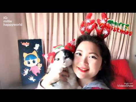 Jingle Bell Rock l Happy Cat Singing