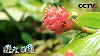 《地理·中国》 20200323 自然胜景·雨林探秘 1| CCTV科教