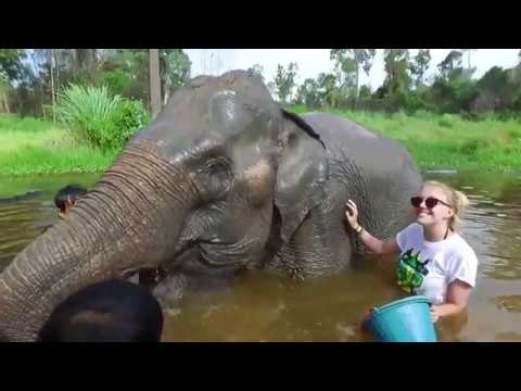 Camp Cambodia - Elephant Conservation, Angkor Wat and Party!