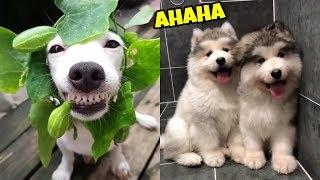 Cún con siêu quậy và đáng yêu #3 | Yêu Pets