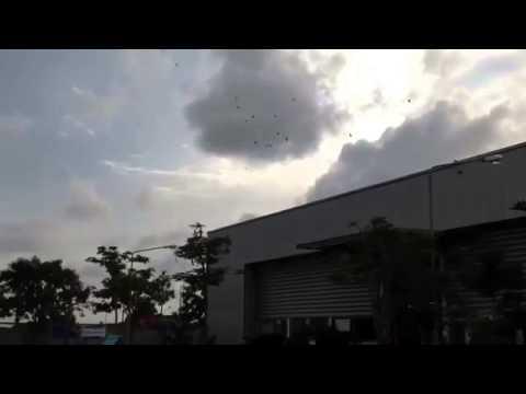 ไล่นกพิราบในโรงงาน กำจัดนกพิราบโดยไม่ฆ่า 081-754-4370 ,087-091-7274