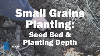 Small Grains Planting Depth and Seed Bed Prep