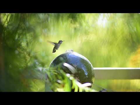 Hummingbird Visits