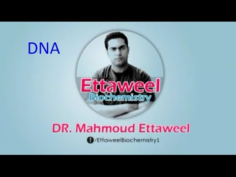Molecular Biology (DNA) revision by Dr. Mahmoud Ettaweel الب