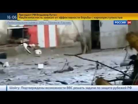 Сбежавший из зоопарка Тбилиси тигр-альбинос напал на человека