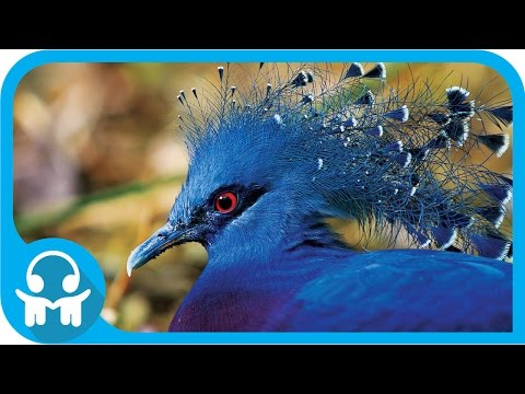 WHITE NOISE | Nature Sounds | Australian Birds