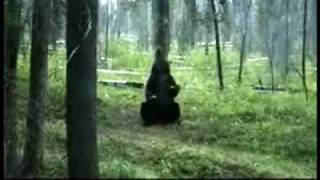 Vertigo Amazing Dancing Bear Video