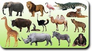 Первые слова малыша. Животные. Развивающее видео.