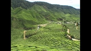 MALAYSIAN BOH TEA PLANTATIONS CAMERON HIGHLANDS