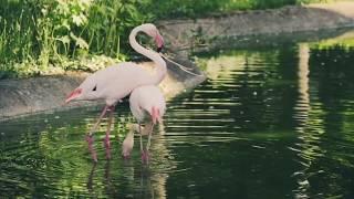 مناظر طبيعية غايه في الجمال مجانية بجوده عاليه بدون حقوق طبع ونشر