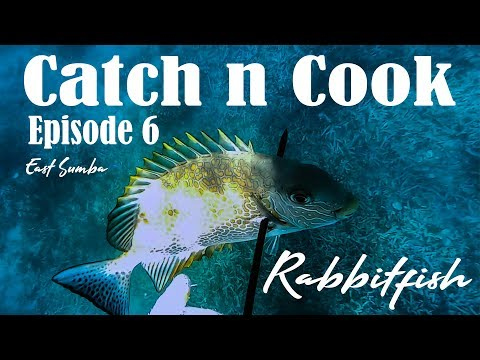 Rabbitfish / Orange-Spotted Spinefoot / Siganus Guttatus - East Sumba - Catch N Cook - Eps 6