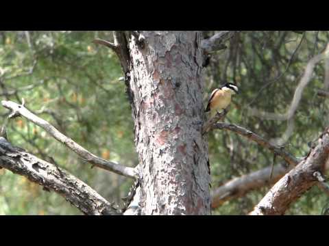 Lesvos Birds Spring 2012
