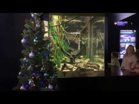 Marc 'The Cope' Coppola - Now I've Seen It All. Electric Eel Lights Up Christmas Tree?