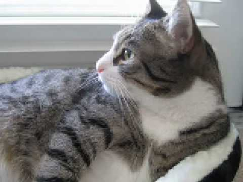 sweet, adoptable(adopted!) cat in Marblehead, Massachusetts