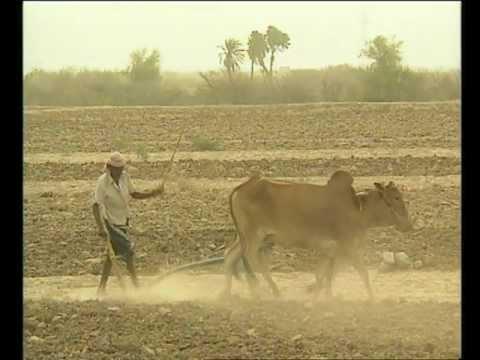 فيلم تسجيلي: يوم الأغذية العالمي، 2006