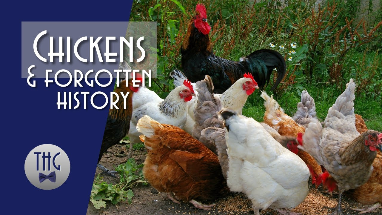 Why did the Chicken Cross the Road? Chickens and Forgotten History