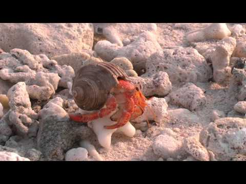 Corporate Video production in North Wales- Maldives - Beautiful wild life