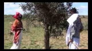 ruwayd: haasawihii hore dhaqanka somalida ft socsa dhaqan