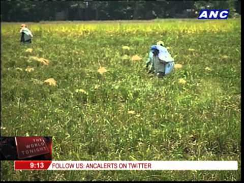 Farmers urged to plant drought-resistant crops