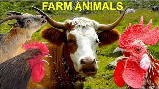 For Kids: FARM ANIMALS and their natural sounds - cow, horse, goat, sheep, rooster, hen, pig, duck