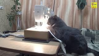Кот шьёт на швейной машинке