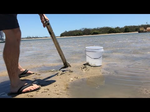 Pumping Yabbies, Catching Whiting.